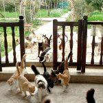 Коты в монастыре