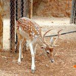 Зоопарк города Лимассол.Кипр.