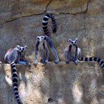 Зоопарк Лимассола.Кипр.