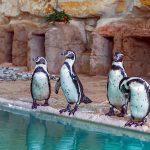 Пингвины на Кипре.Зоопарк.Пафос.
