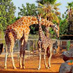 Зоопарк в Пафосе._1