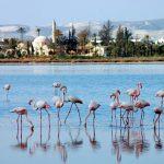 Соляные озера Ларнаки.Кипр.